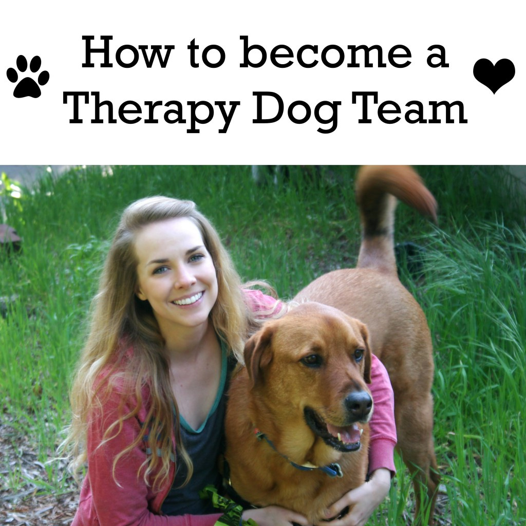 therapy dog team Learn about the aspca's classes, evaluations and workshops for people wishing to register their dogs and cats as therapy animals.