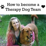 Becoming a Therapy Dog Team